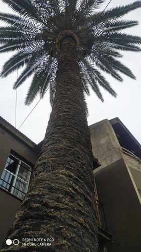servicio de podas y tala de arboles zona sur, palmeras