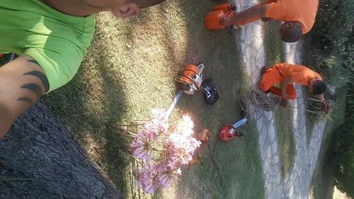 servicio de podas y tala de arboles,poda de palmeras capital