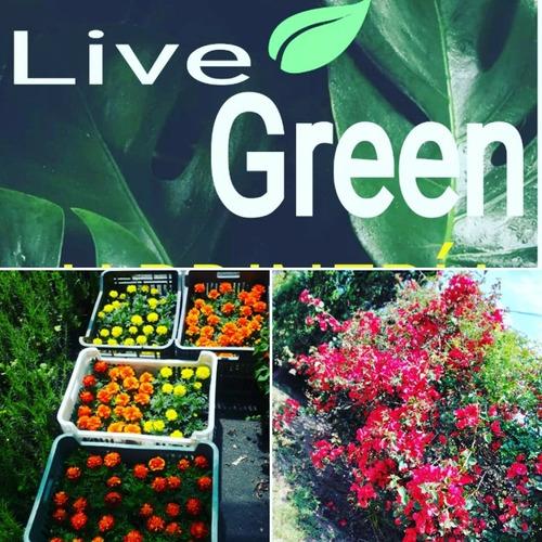 servicio integral de jardinería