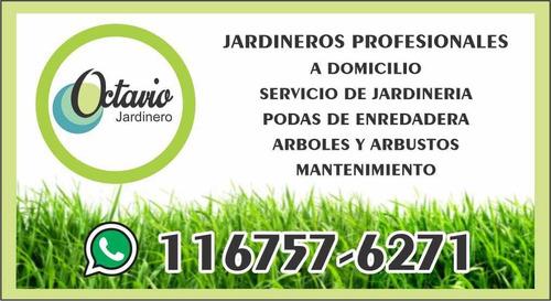 servicio jardinería, mantenimiento