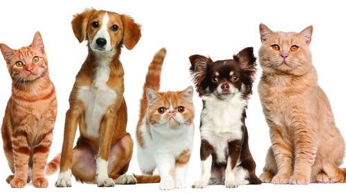 servicio medico veterinario a domicilio