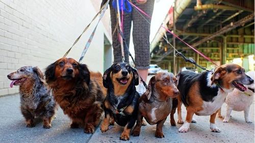 servicio paseo canino educativo profesional zona norte