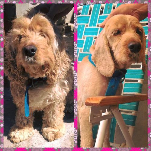 servicio peluquería canina
