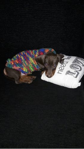 servicio perro salchicha
