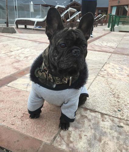 servicio stud bulldog francés con f.c.a
