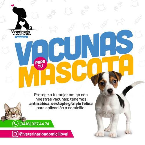 servicio veterinario, permisos de viaje