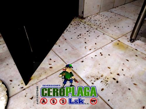 servicion fumigaciones chiripas cucarachas termitas roedores