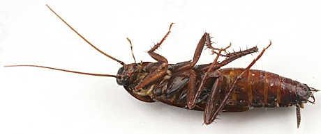 servicios de fumigacion combatimos chiripas cucarachas