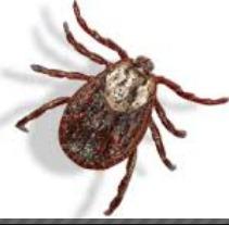 servicios de fumigacion  de pulgas garrapatas y cucarachas