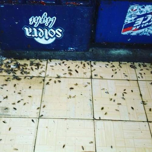 servicios de fumigaciones de chiripas  cucarachas con polvo