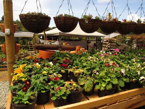 servicios de jardinería, grama, suculentas, vivero, tierra.