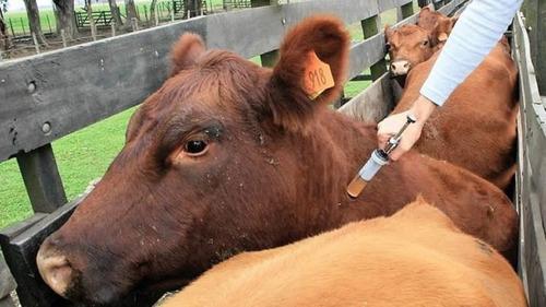 servicios de manejo sanitario en ovinos, bovinos y porcinos