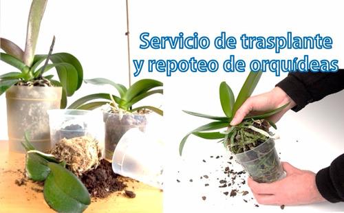 servicios en jardineria y cultivo de orquideas