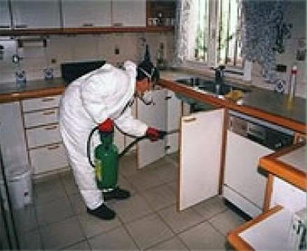 servicios fumigaciones en general cucarachas, chiripas pulga