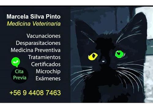 servicios veterinarios a domicilio en la quinta región
