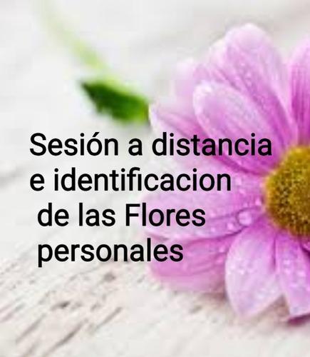 sesión de terapia con flores de bach con receta personal