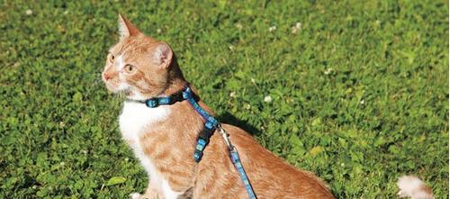 set arnés con correa para gatos - cat it (small) + envío!