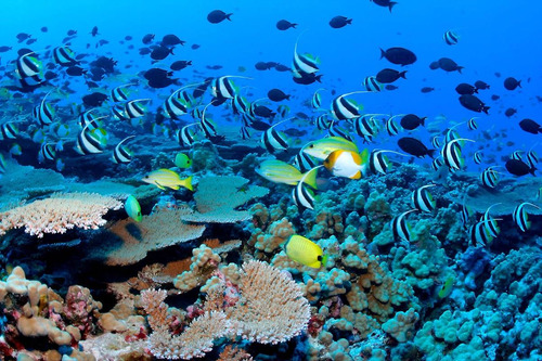 set buceo intex ® envió gratis - aletas + careta + snorkel