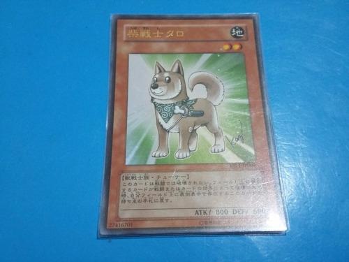 shiba warrior yap1-jp009