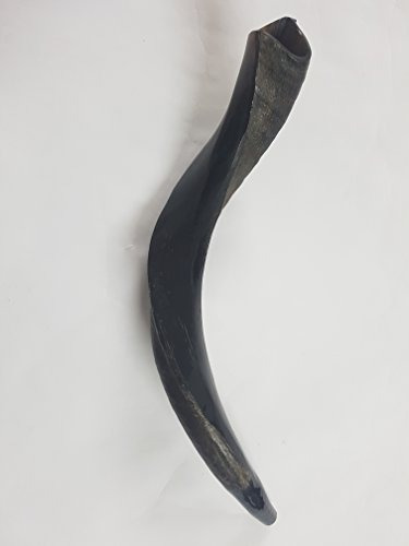 shofar kosher yemenite kudu horn half polish half natural si
