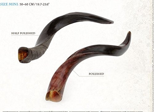 shofarot israel kosher yemenite kudo kudu shofar mini size 2