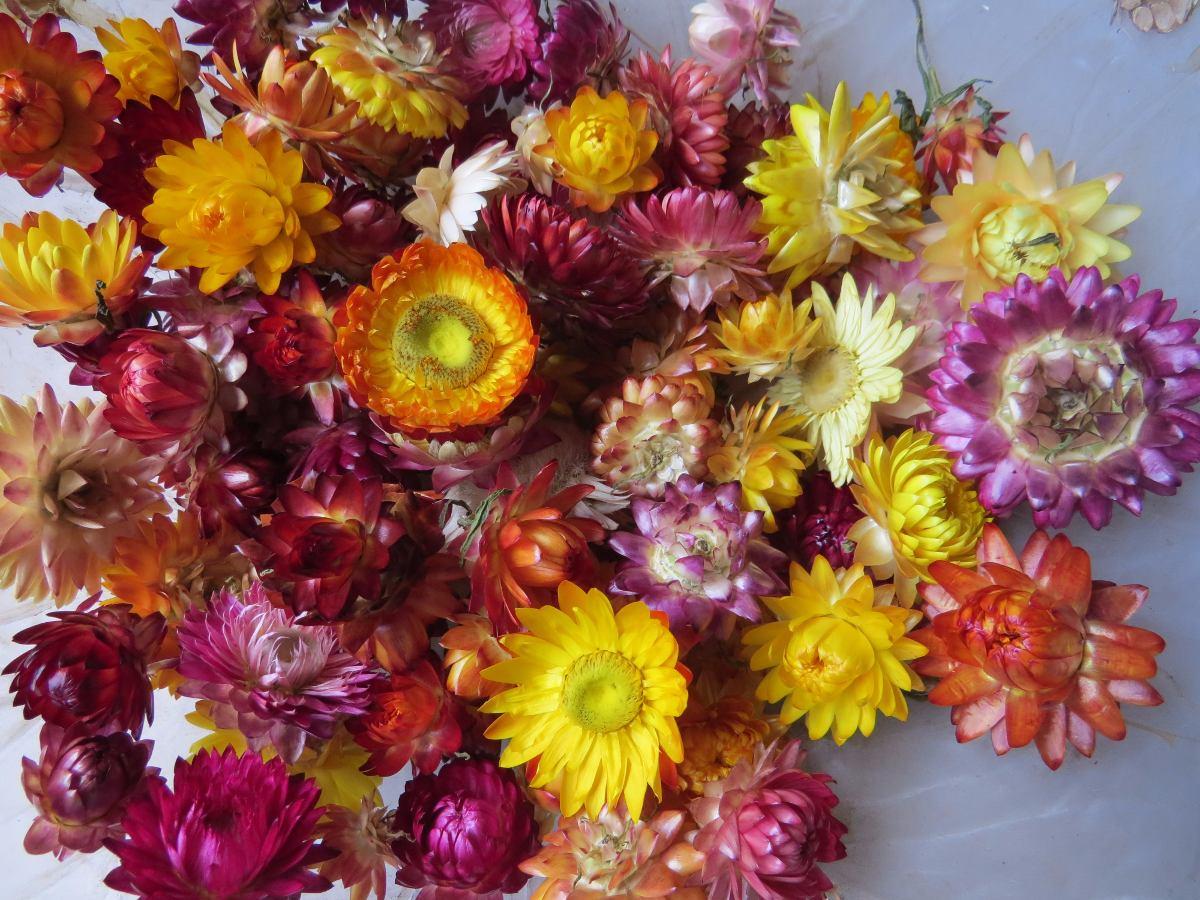 Siempre Vivas O Flores De Papel Flores Secas X 100gr 200 00 En