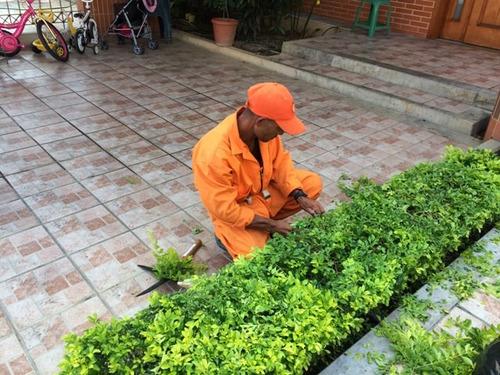 siempreverde: mantenimiento de areas verdes