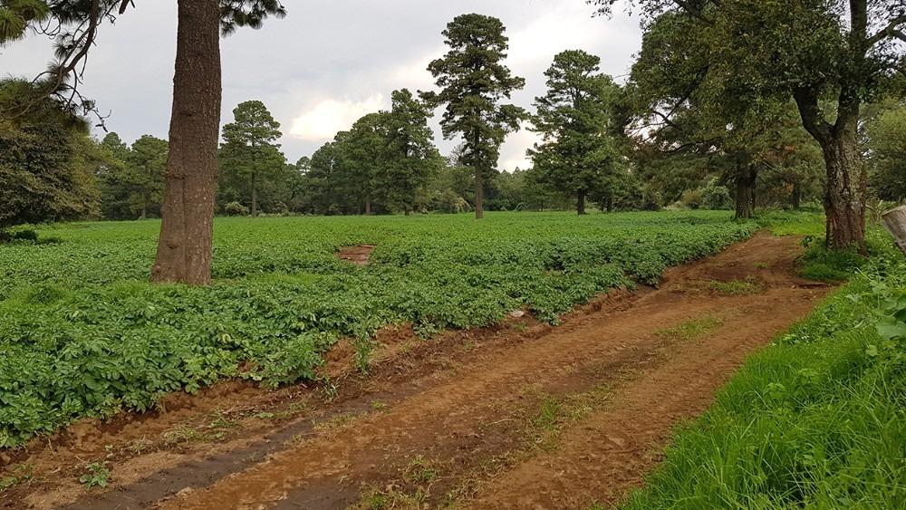 siete hectáreas agrícolas en juanacatlán