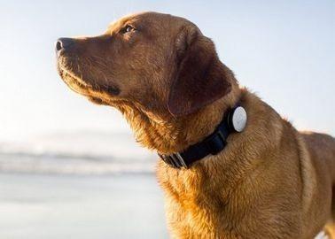 silbato monitor de actividad diaria para mascota nuevo