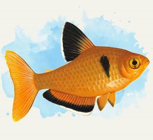 silicone p/ aquarios. alta resistencia. inofensivo p/ peixes