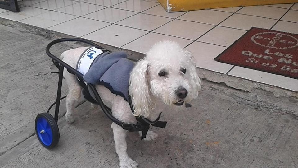 Silla de ruedas para perro 1 en mercado libre - Ruedas para sillas de ruedas ...