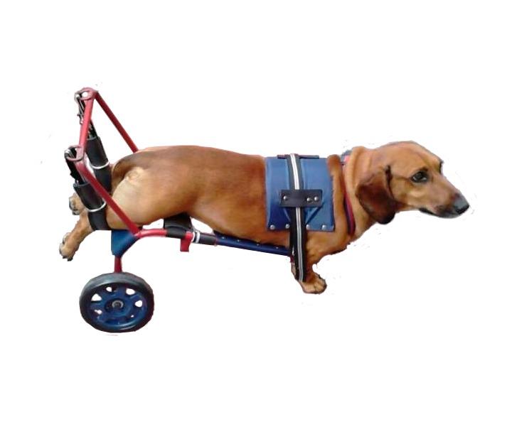 Silla de ruedas para perros gatos arnes 1 en for Sillas para perros