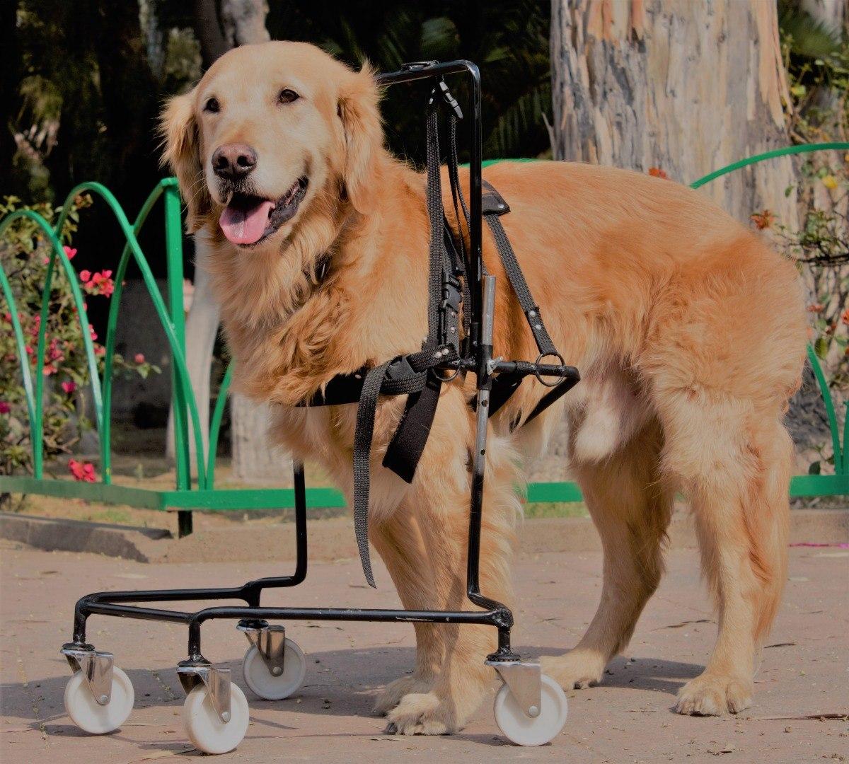 Silla de ruedas para perros patas delanteras 2 for Patas con ruedas