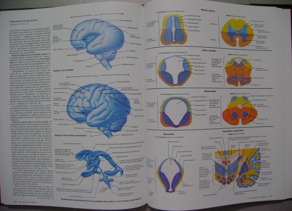 Sistema Nervioso Anatomía Y Fisiología Tomo 1.1 / Netter - $ 396.000 ...