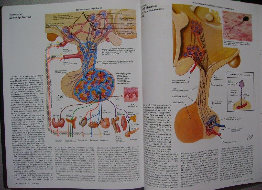 Encantador Tarjetas Anatomía Netter Bandera - Imágenes de Anatomía ...