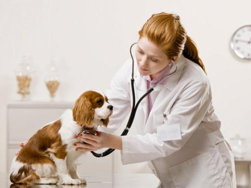 sistema practico para veterinarios