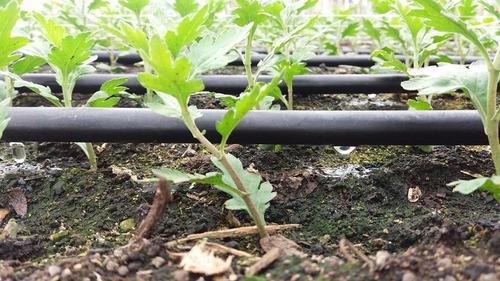 sistemas de riego para cultivos y jardines
