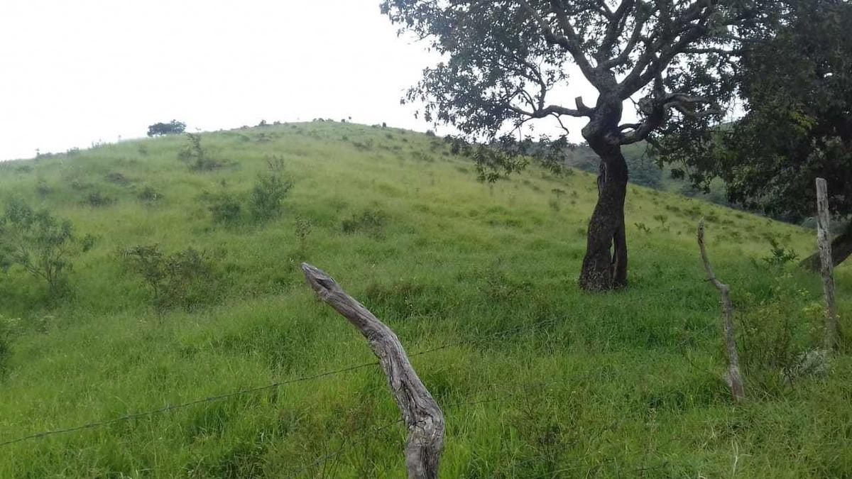 sítio 15 hectares , com cachoeira , vista da serra da careta - 479