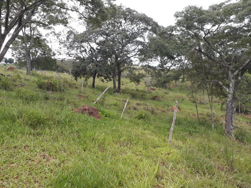 sítio 31 hectares em baependi mg - beira do rio piracicaba. área para oliveiras - 453
