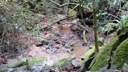 sítio 40.000m próx. a sorocaba - excelente p/ turismo rural