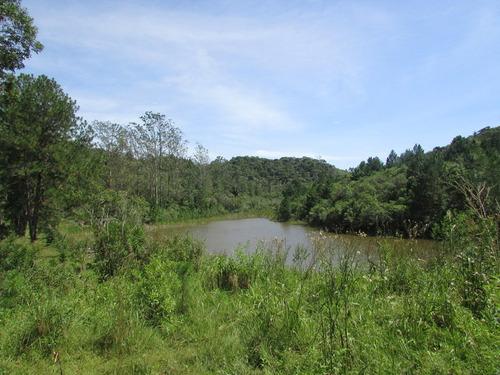 sitio 80 alq,pasto, lagos, nascente, plantação, ref: 04568