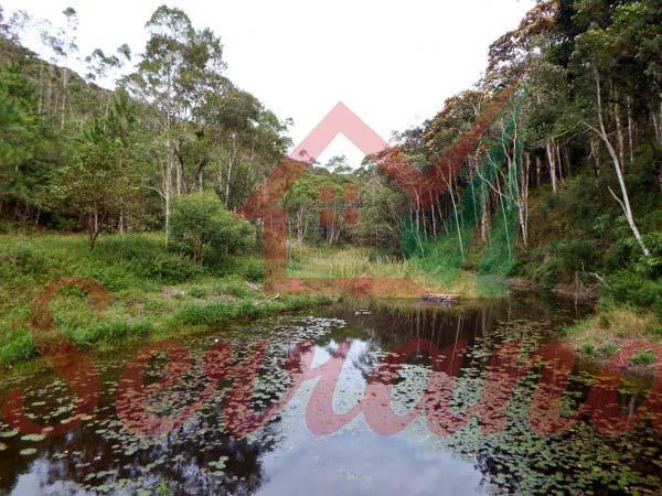 sítio com 122.134 m² com 2 lagos com muitos peixes