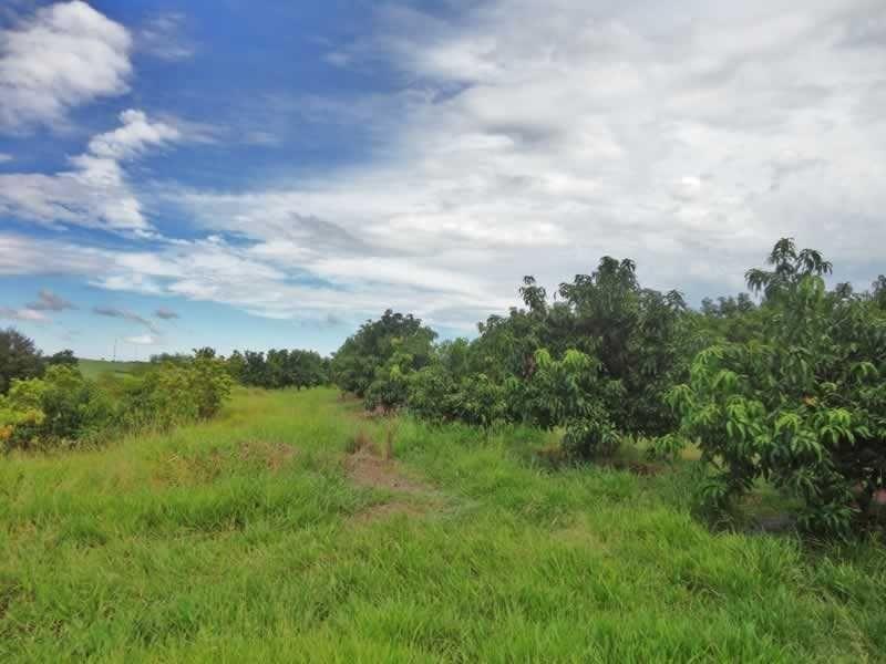 sítio com 19 hectares entre campinas e mogi mirim - 1043