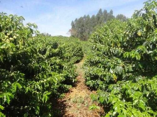 sítio com 33 hectares em alfenas/mg - 1015