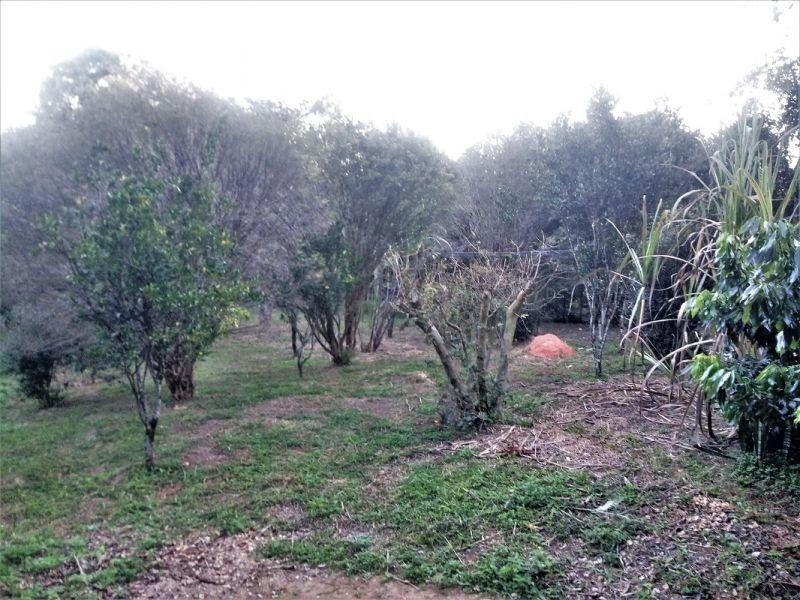 sítio com 6 quartos para comprar no quinta das palmeiras em pedro leopoldo/mg - 375