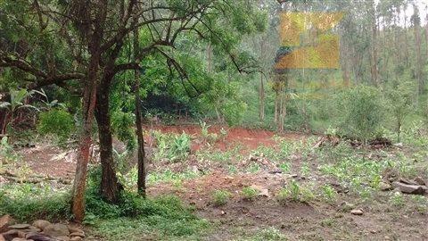 sítio com plantação de eucalipto (corte para 2 anos) - codigo: ch0132 - ch0132