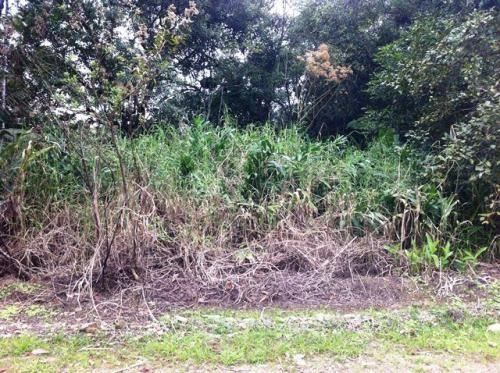 sítio no jardim aguapeú, em itanhaém