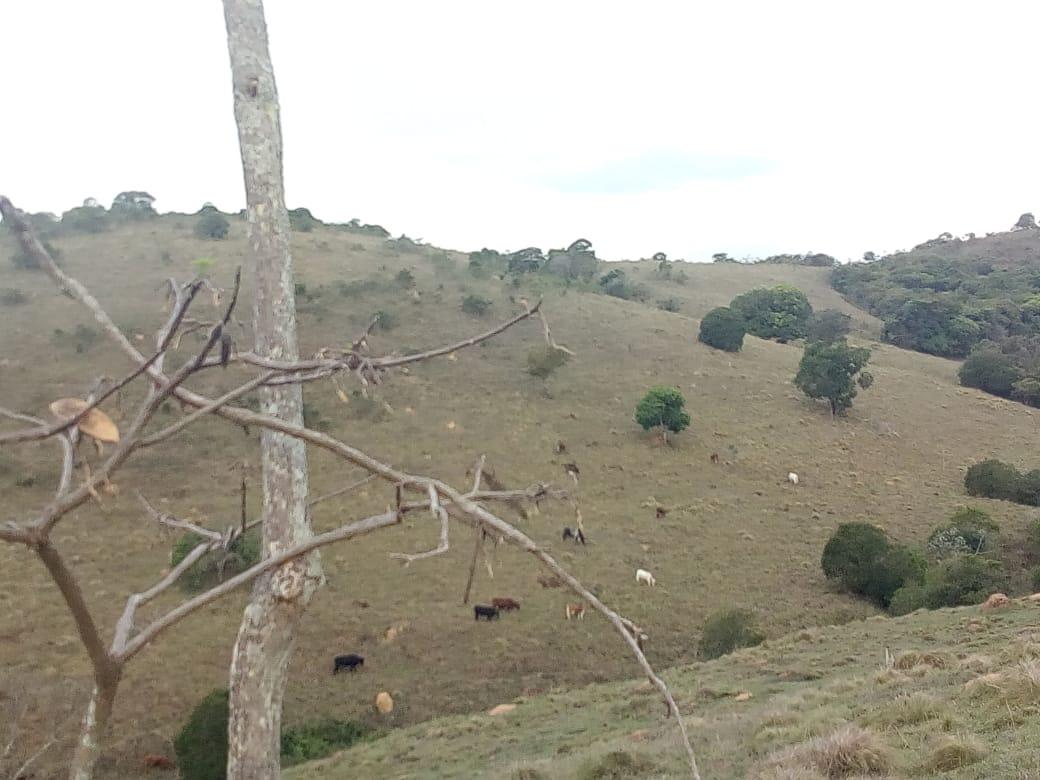 sítio no sul de minas, cidade de baependi , com muita água , riacho dentro do sítio , 02 casas , 90 % tratorável, área boa para plantio grãos e oliveira. - 350