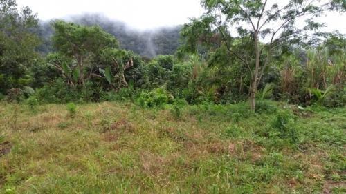 sitio para plantação e pasto em itanhaem sp