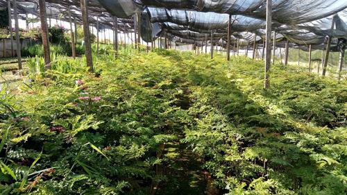 sitio produtor de flores ornamentais. ( atacadista )